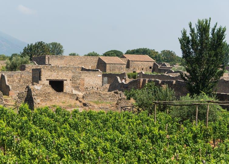 Vignobles et ruines